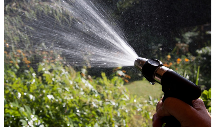 Watering Your Garden with City Water Injects Pharmaceuticals Into Your Veggies