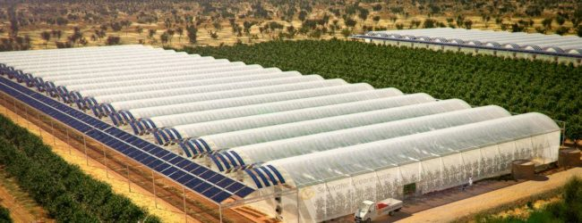 Desert Farm Grows 17,000 Tons of Food Without Soil, Pesticides, Fossil Fuels or Groundwater