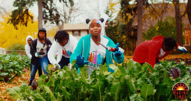 Urban Gardening Revolution Spreading With Help From Youth Music Video