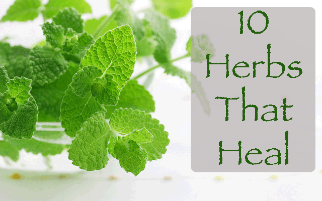 10 Herbal Remedies For The Most Common Complaints