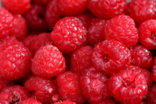 DIY Guide To Growing Raspberries