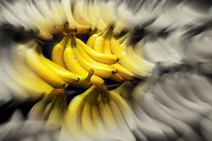 Banana May Rapidly Become Extinct From Fungus: Death of the Seedless Banana