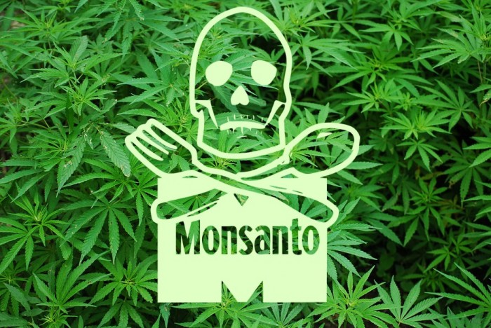 The War on Weed Is Winding Down – but Will Monsanto Be the Winner?