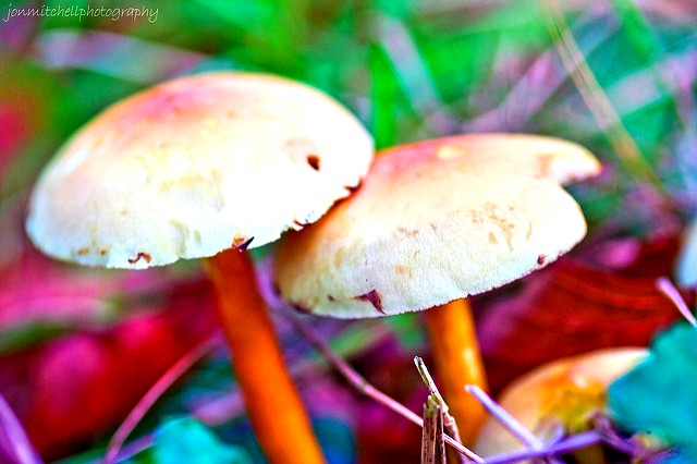 Magic Mushrooms Could Be a Life Saving Insect Repellent