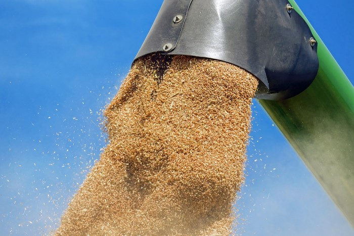 10 Reasons Wheat Is Toxic Whether You are Gluten Sensitive or Not