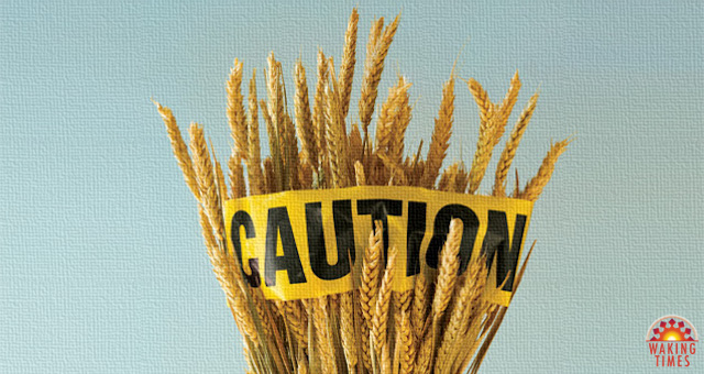 wheat-caution-1