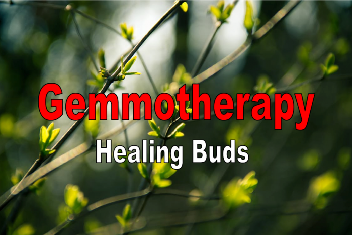 Gemmotherapy – The Healing Power Of Buds
