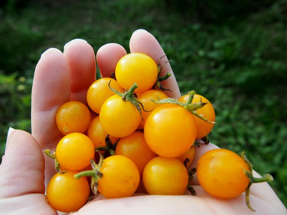tomatoes-1826954_960_720