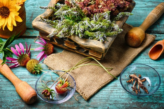 7 Reasons Why You Should Have a Medicinal Garden