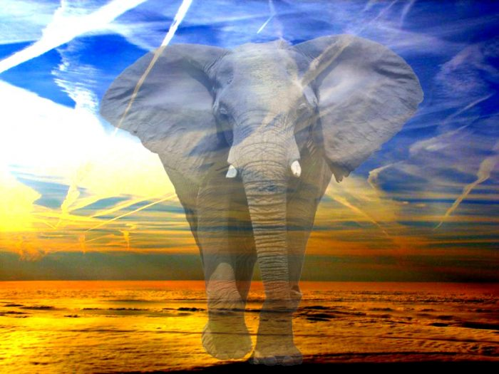 The Elephant in the Sky: Chemtrails, Contrails and Climate Engineering