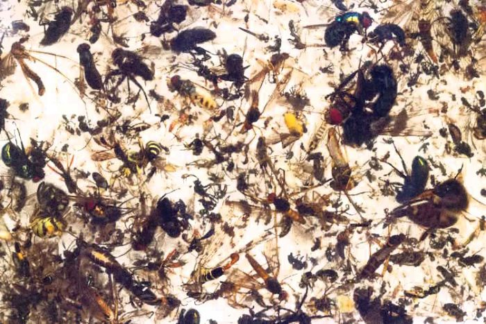 """""""On Course for Ecological Armageddon"""" – Researchers Sound Alarm as Insect Die-Off Worsens"""