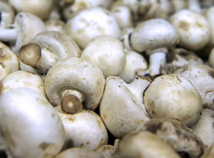 mushrooms antiaging