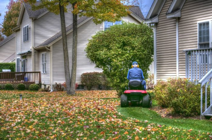 3 Solid Reasons Never to Rake Your Leaves Again