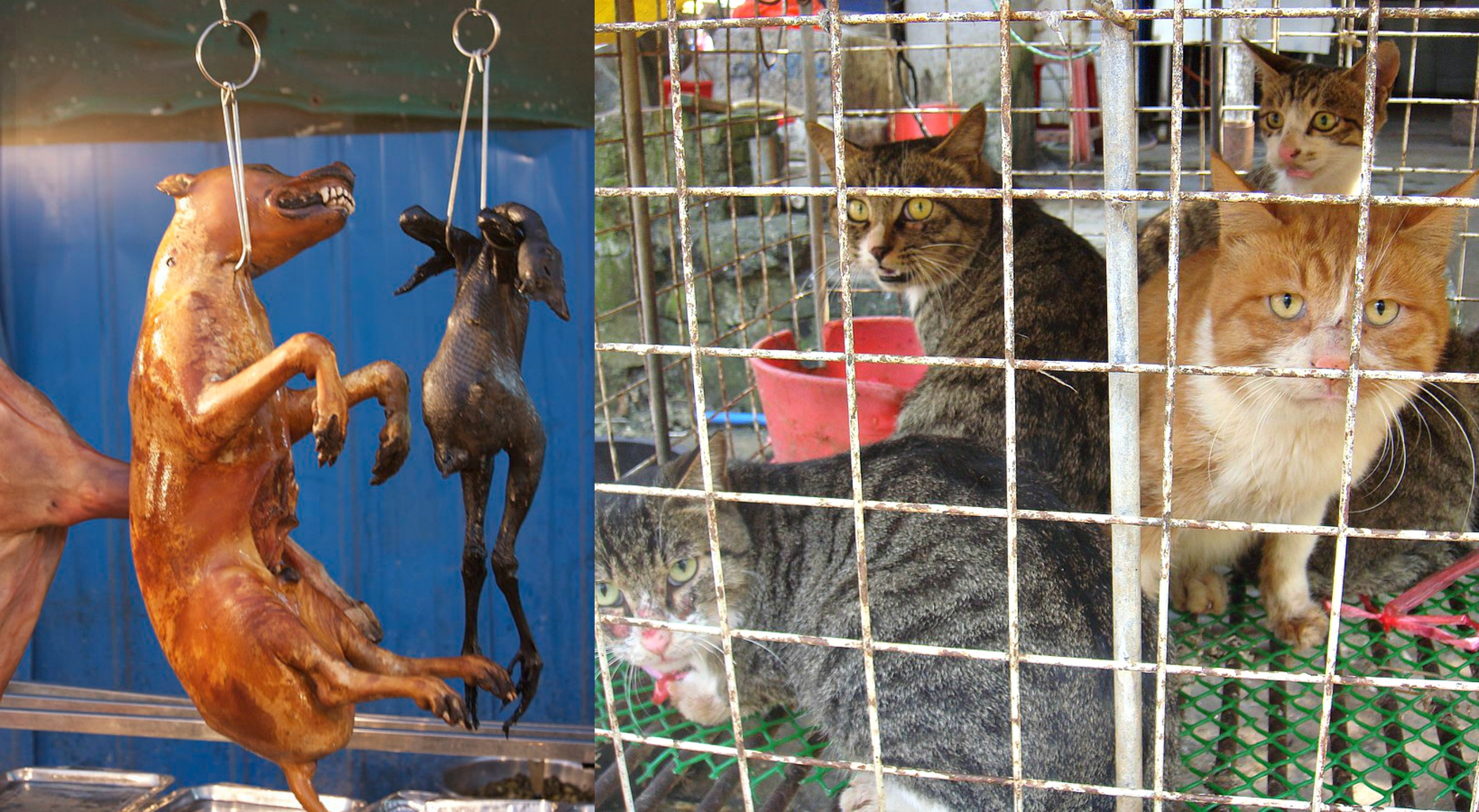 The Dog Cat Meat Trade in South Korea