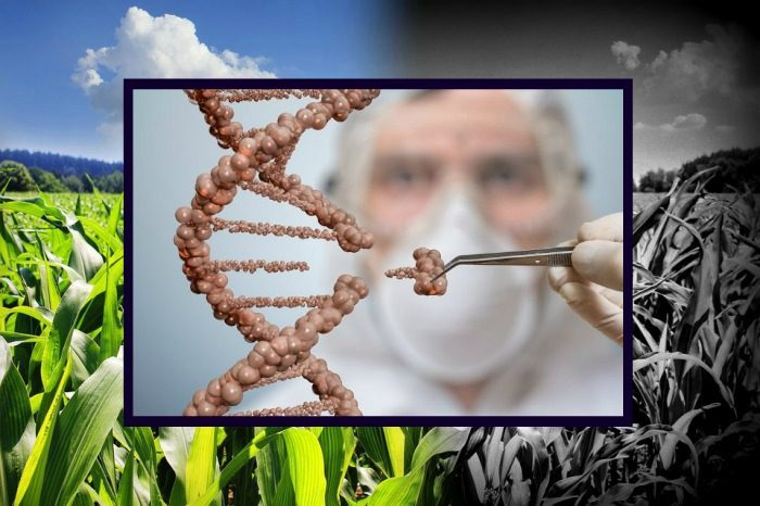 Gene-Editing Will be Regulated in Same Way as GMOs in EU