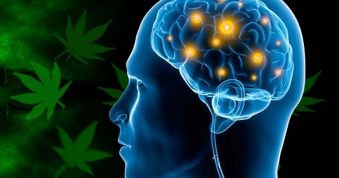 Cannabis Study Reveals How CBD Offsets Psychiatric Side-Effects of THC