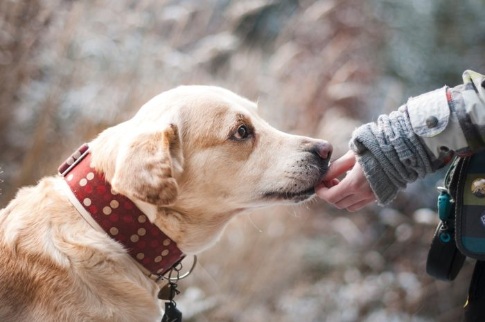 Dog Ownership Associated with Living Longer
