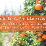 You Don't Want to Know What They Do To Oranges (And It's About To Get Even Worse)