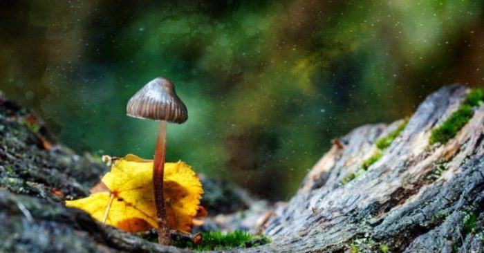 It's Official: Denver to Vote on Decriminalizing Magic Mushrooms