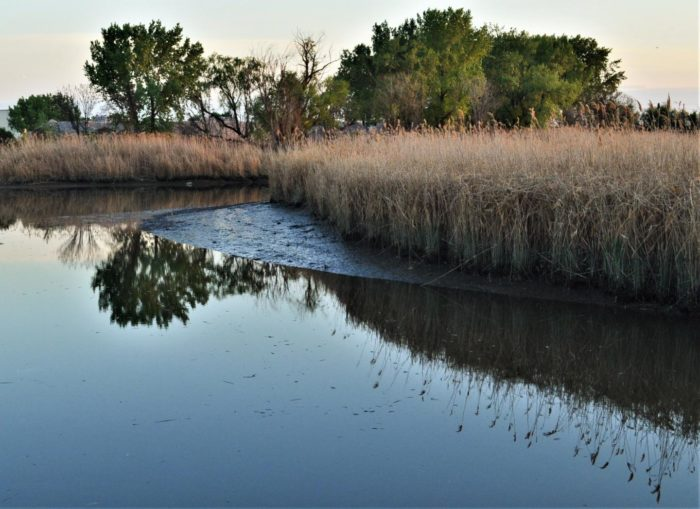 'Legacy' Mercury Pollution Still Contaminating New Jersey Meadowlands Waters