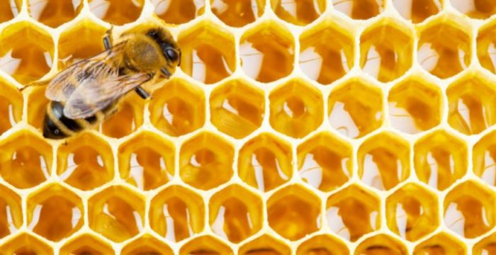 Eight Reasons to Consume Bee Propolis
