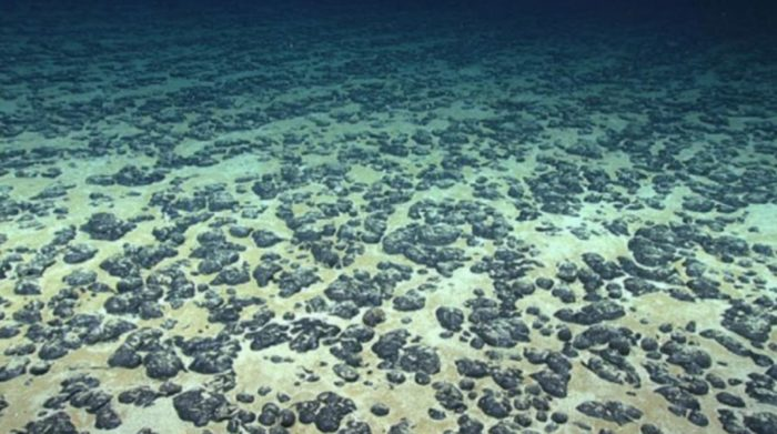 Scientists Resurrect 100-Million-Year-Old Life Buried Under Seafloor Since Dinosaur Age