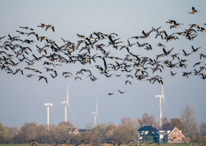Bird Deaths Drop By 70% After Painting Wind Turbine Blades Black