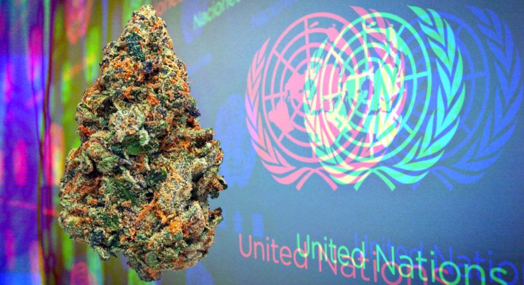 As Nações Unidas reconhecem oficialmente a cannabis como medicamento em votação histórica 2