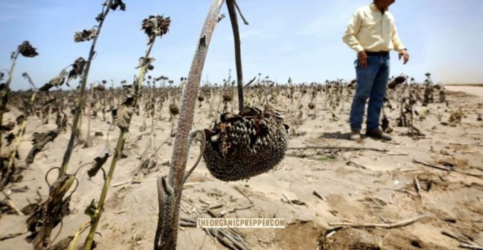 Are We Headed for a Full-On Famine? Fires, Drought, and Foreign Entities Buying Farms and Food Processing Plants